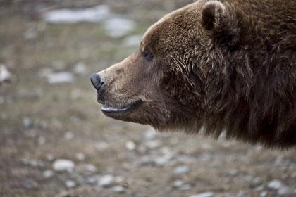bear eat you